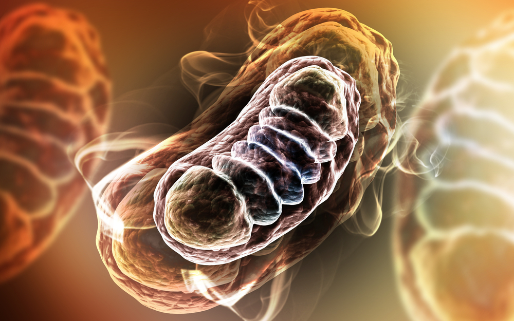 """Mitochondria and the Many Disorders That Compose """"Mitochondrial Disease"""""""