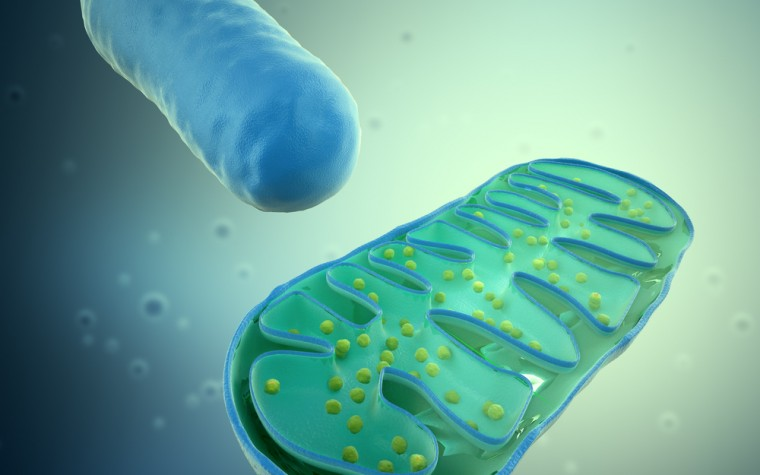 Ketogenic diet on mitochondrial function in Leigh Syndrome