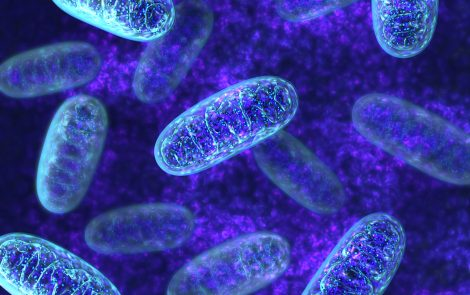 Protein That Helps Our Circadian Clocks and Mitochondria Work Together Identified in Study