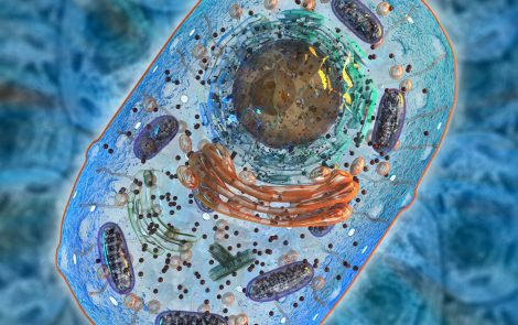 Mitochondrial Replacement Therapy Shows Promise at Preventing Disease, But Challenges Remain