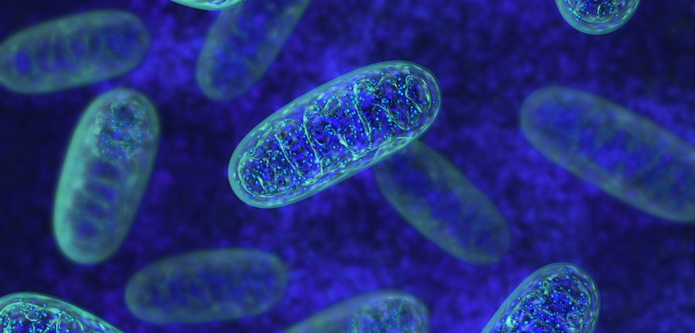 Some Antioxidants Show Benefits in Models of Mitochondrial Disease, Study Reports