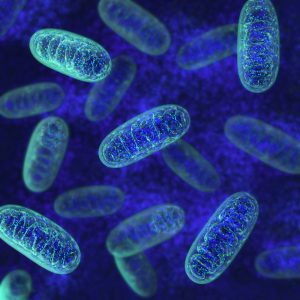 Ban on Designer Babies Also Stymies Testing for Mitochondrial Disease Therapies