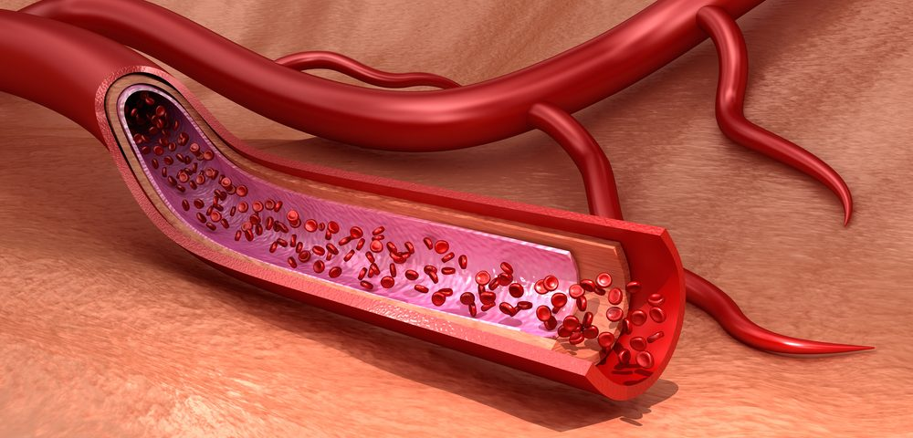 Aerobic Exercise Boosts Mitochondria and Health of Arteries in Elderly Mice