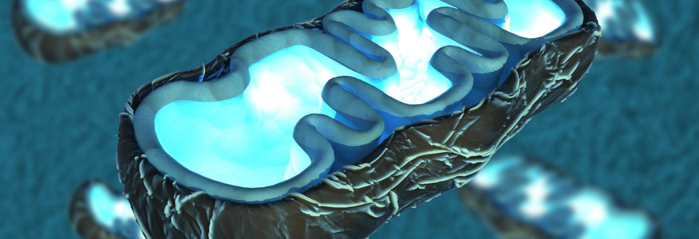 Scientists Get a Closer Look at Mitochondria, Revealing Vital Links to Cell Death