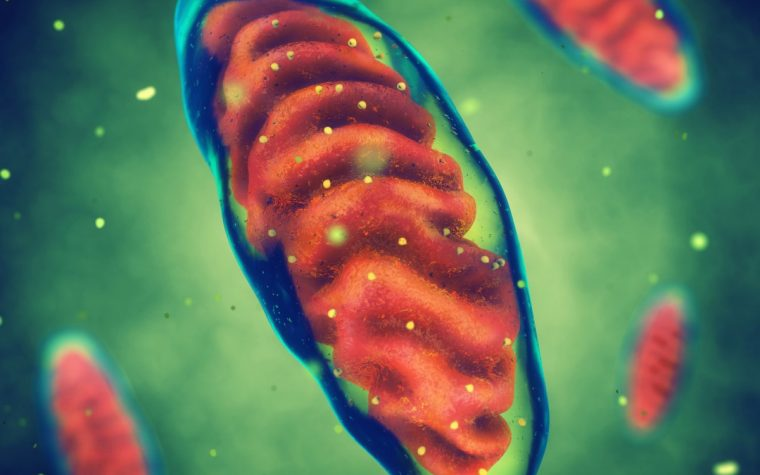 Compound Mimicking Coenzyme Q10 May Help Protect Neuronal Mitochondria, Study Suggests