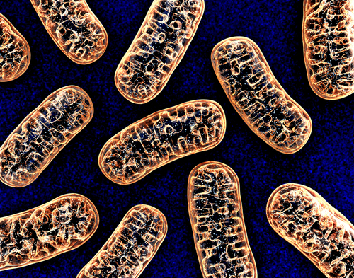 DNA mutations, bottleneck, mitochondrial disease