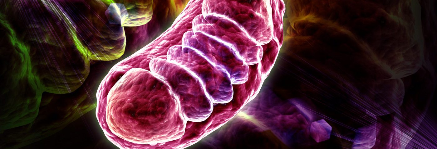 New Fluorescent Marker Allows Detailed Study of Mitochondria in Live Cells, Study Reports