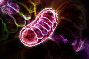 Elesclomal and mitochondrial disease