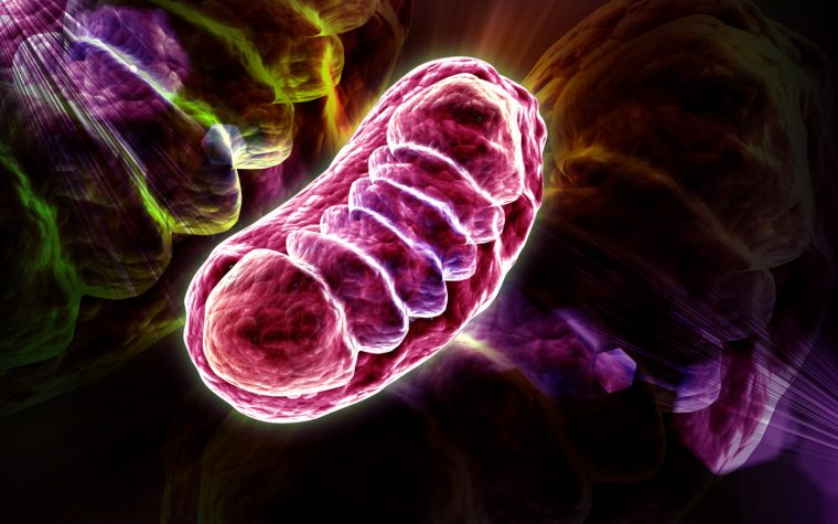 mitochondrial disease and KH176