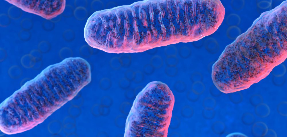 New Method Improves Delivery of Healthy Mitochondria To Cells Where It Is Dysfunctional, Study Shows