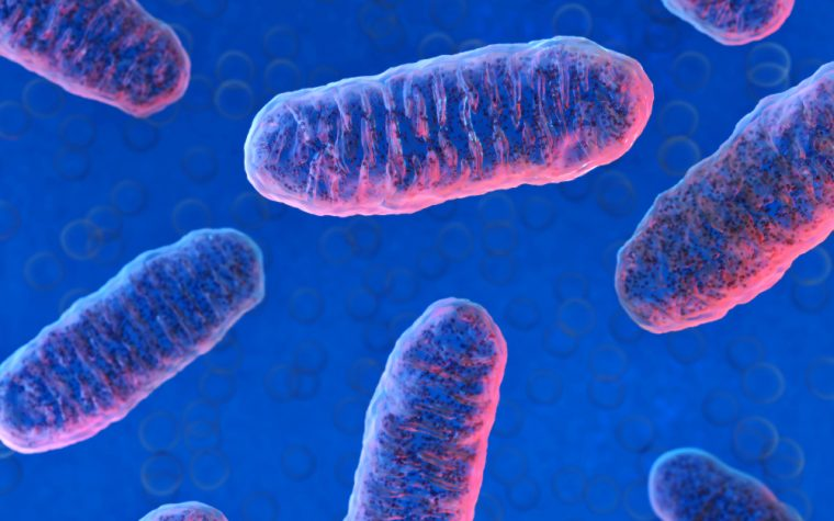 Mitochondrial DNA from Fathers Could Lead to New Therapies, Study Suggests