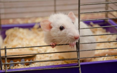 AOX Enzyme May Alleviate Symptoms of Mitochondrial Disease, Mouse Study Shows